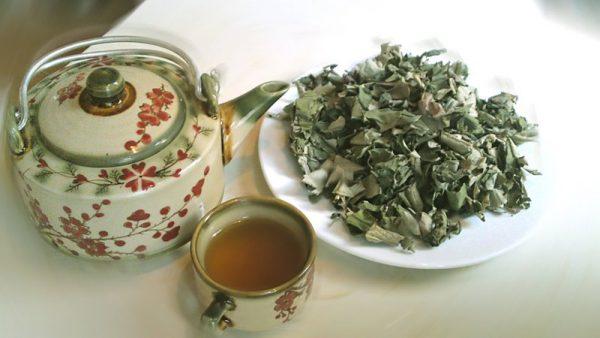 Uống nước lá sen giảm béo từ trà lá sen