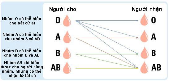 Nhóm máu
